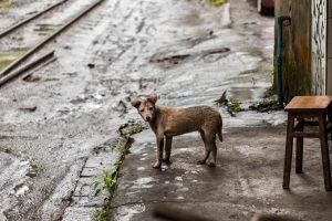 Къде да сигнализираме за бездомни кучета?