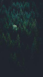 Закупуване на гори от държавни предприятия