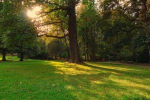 Актуален текст на заповедта за посещения в паркове